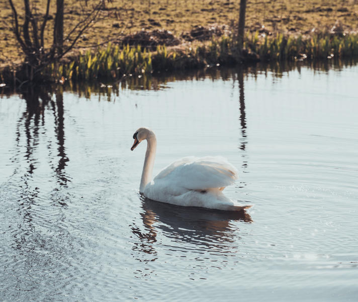 Row around the canals, see waterbirds and make a fire at night on our small camping! #6