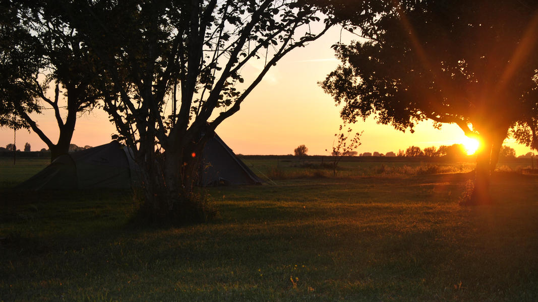 Camping between cows and horses in the 'central park' of the Randstad #7