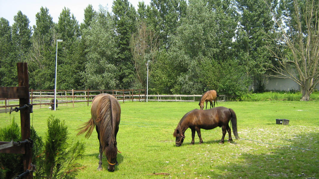 Camping at our mini campsite among the horses on the edge of the Eendenkooi nature reserve #17