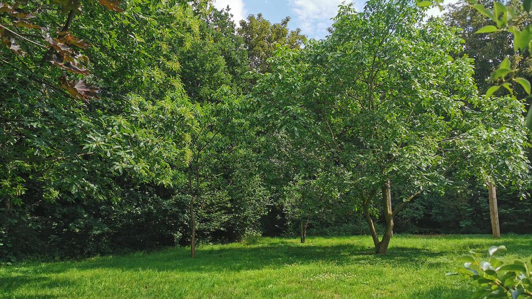 Kom tot jezelf in de tuin, in het bos, bij ons yogacentrum, grenzend aan landerijen #10