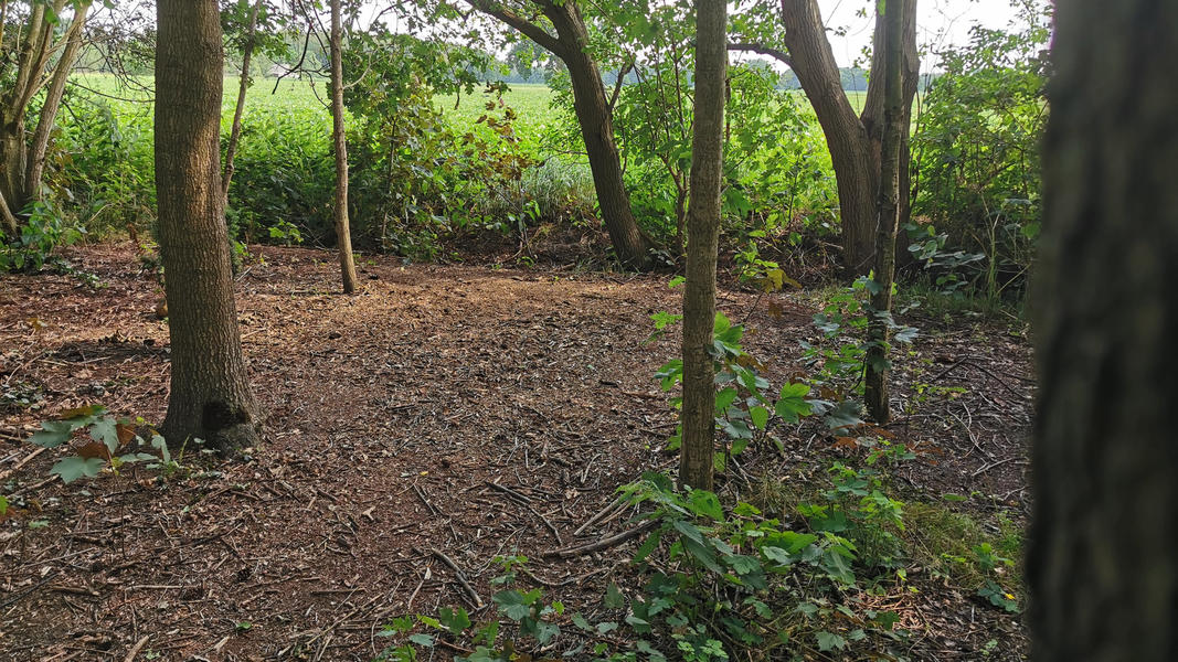 Come to yourself in the garden, in the forest, at our yoga center, adjacent to farmlands #12