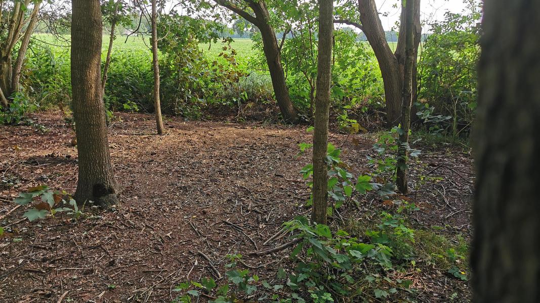 Kom tot jezelf in de tuin, in het bos, bij ons yogacentrum, grenzend aan landerijen #12