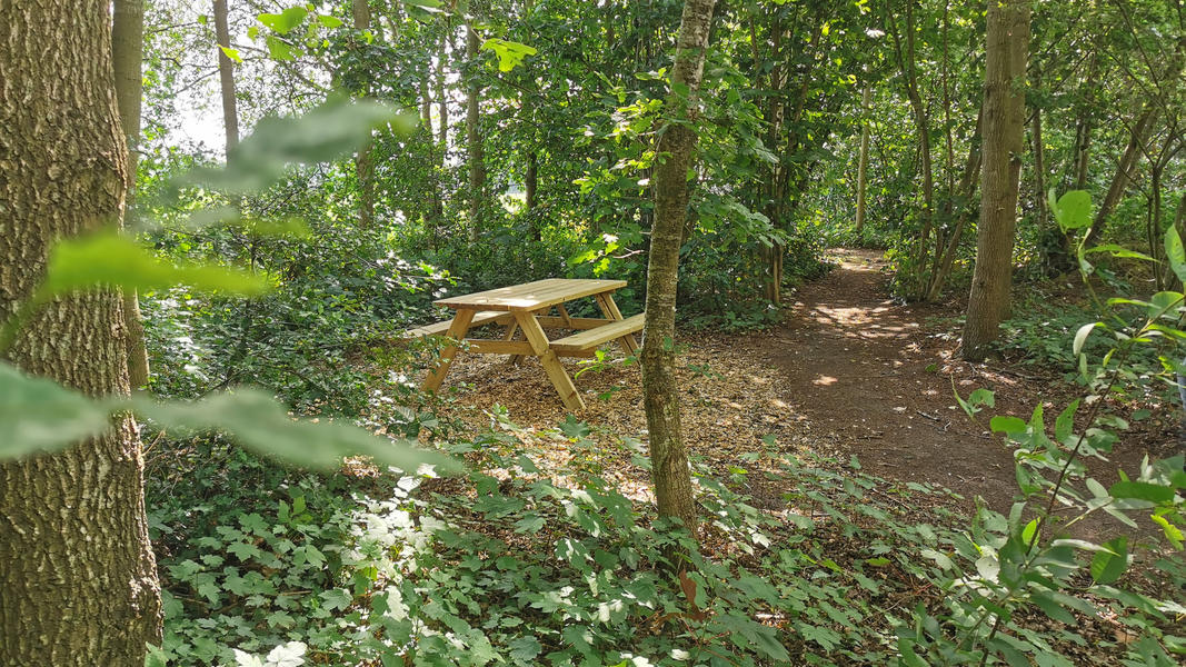 Come to yourself in the garden, in the forest, at our yoga center, adjacent to farmlands #4