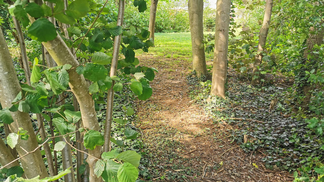 Come to yourself in the garden, in the forest, at our yoga center, adjacent to farmlands #5