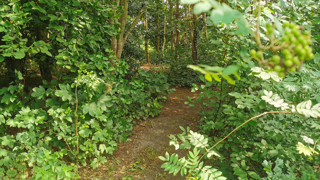 Come to yourself in the garden, in the forest, at our yoga center, adjacent to farmlands #7