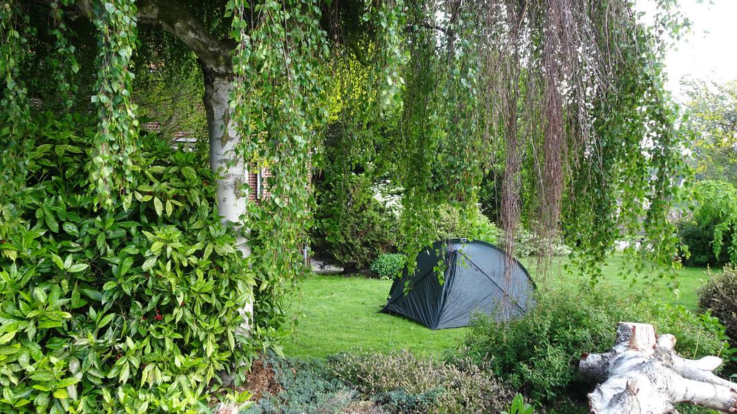 Agnes's nature campsite #9