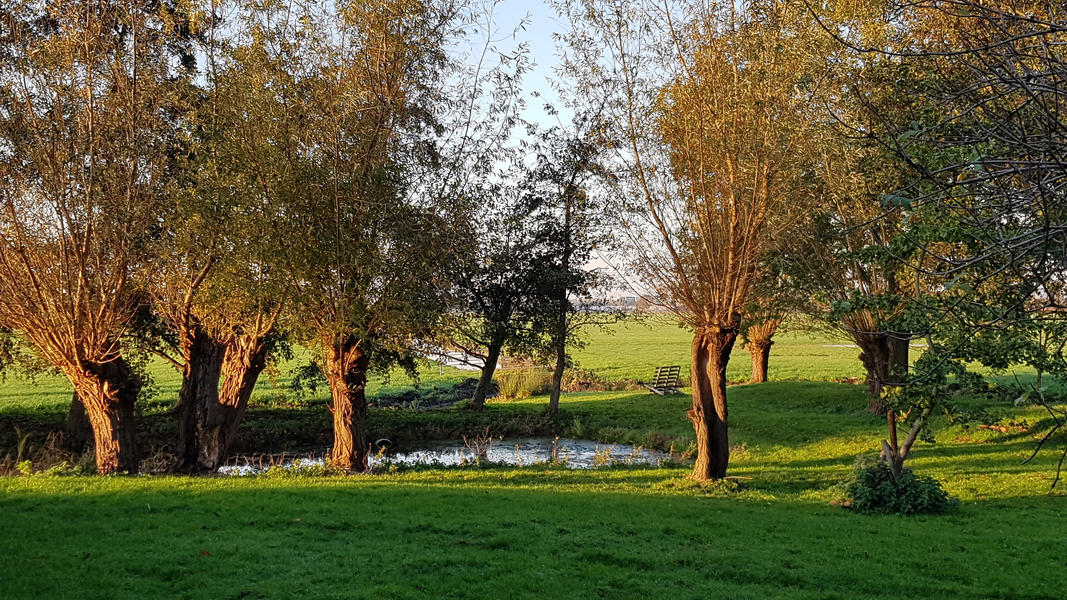 An oasis between the meadows of Midden Delfland! #6