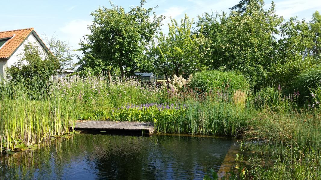 Camper plek op rustig erf in de polders van Zeeuws-Vlaanderen #1