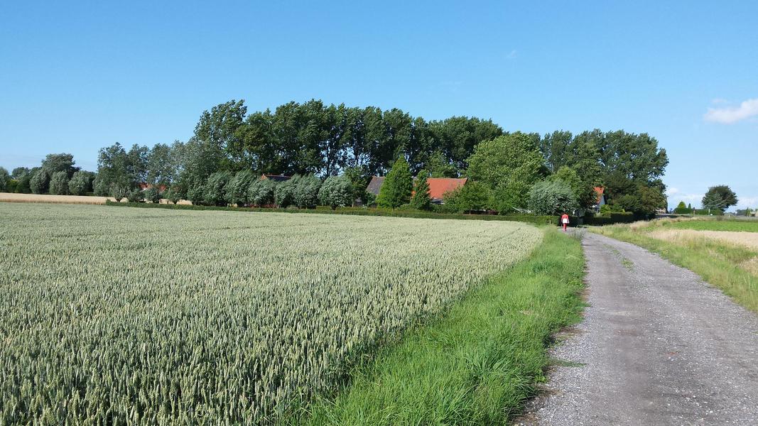 Camper spot on a quiet yard in the polders of Zeeuws-Vlaanderen #3