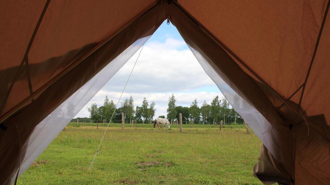 Overnachten in een Sahara tent midden in het weiland tussen de pony's #2