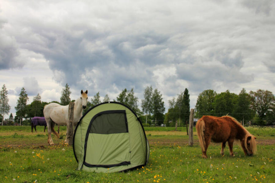 Peace and Space, spend the night in our pasture between the ponies #1