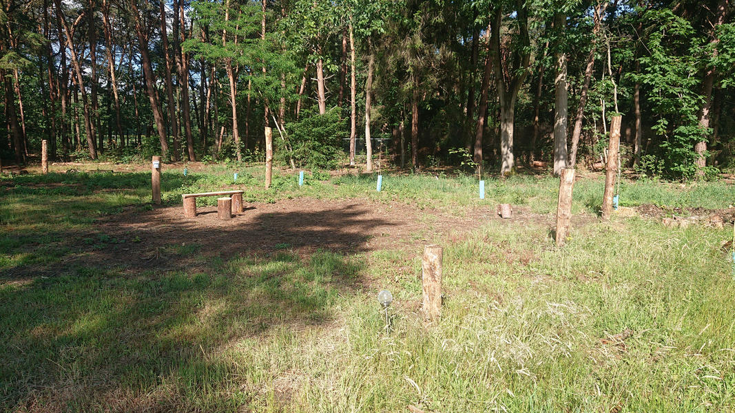 Camping in a young food forest, place Raspberry #3