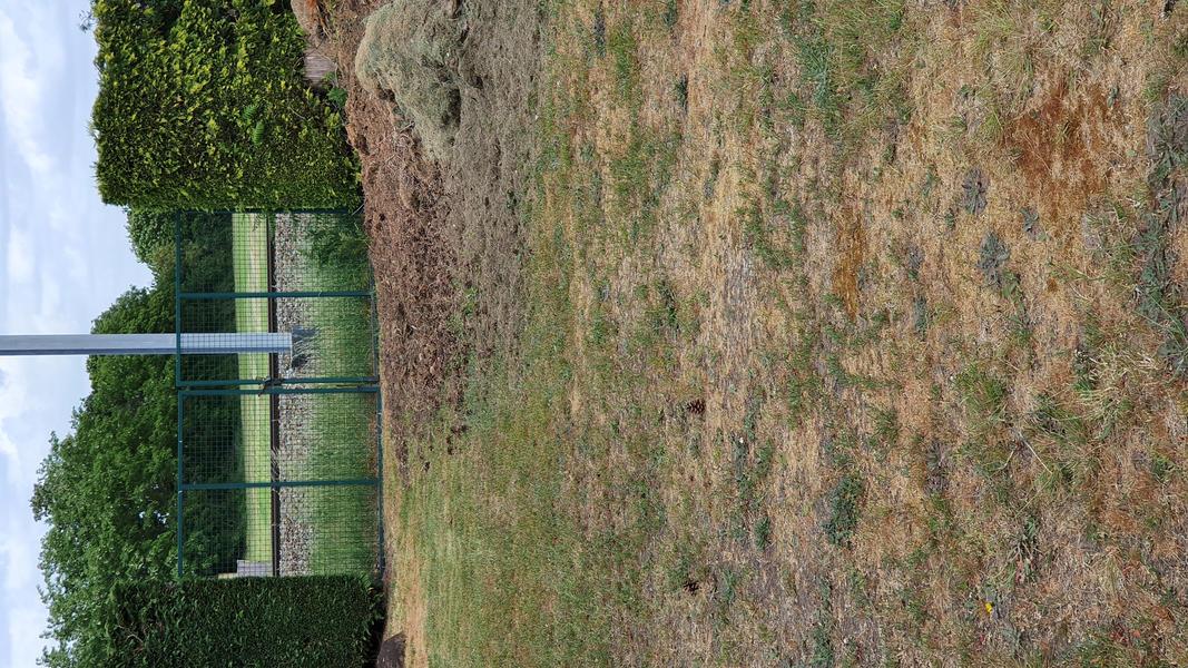 Grote achtertuin in Bosland (Belgisch Limburg). #7