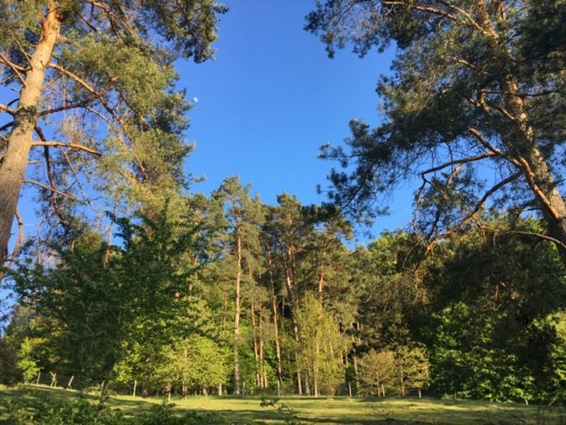 Wildlife Hill 4 micro camping im Naturpark Steigerwald #10