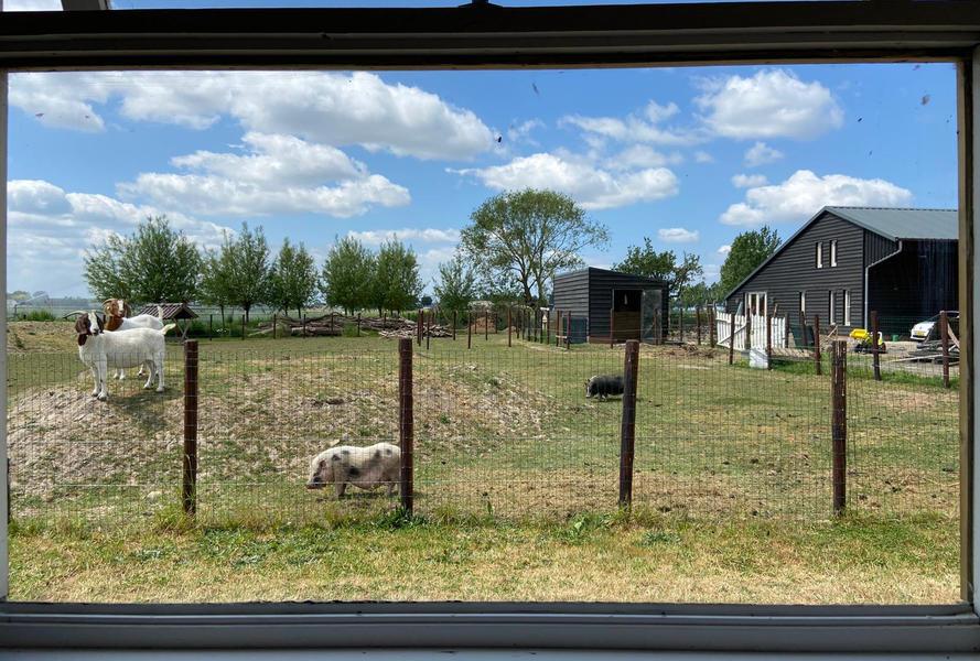 Genieten in een pipowagen met uitzicht op de varkens en geiten! #4