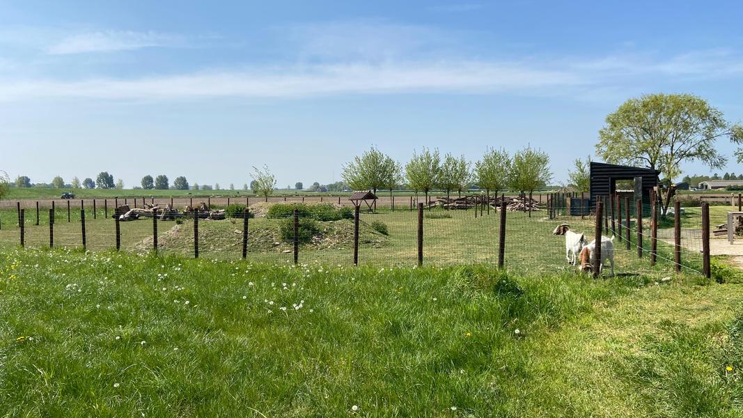 Genieten in een pipowagen met uitzicht op de varkens en geiten! #6