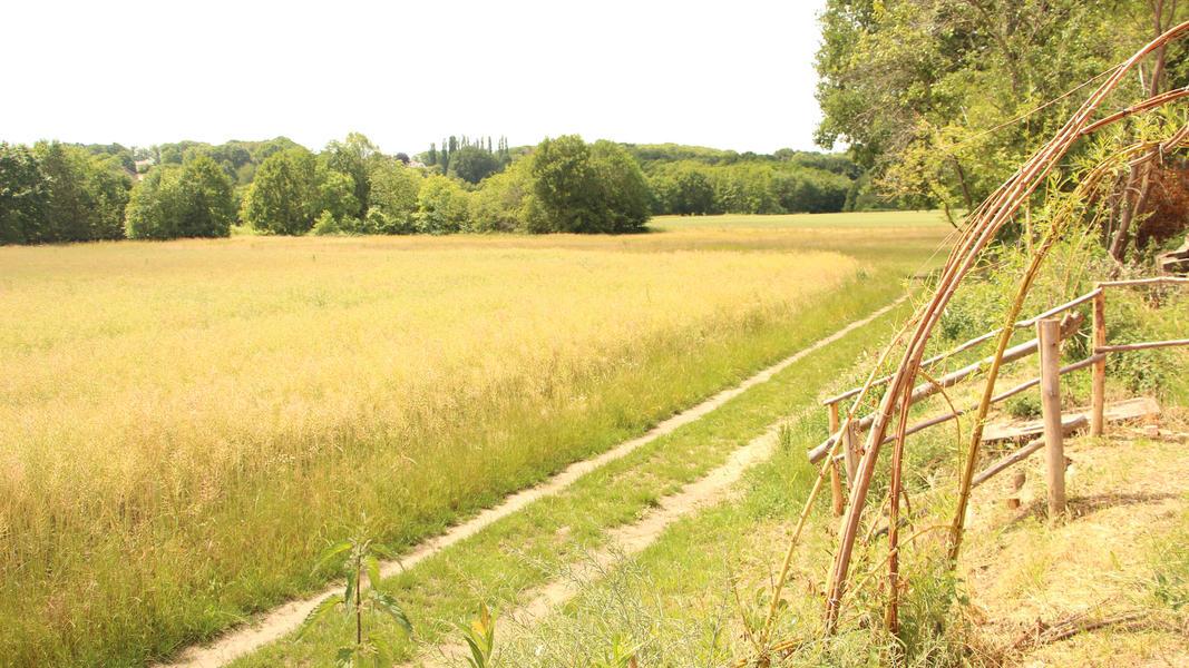 Campspace in Holsbeek #3