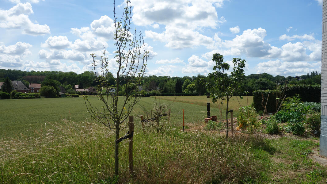 Campspace in Holsbeek #4