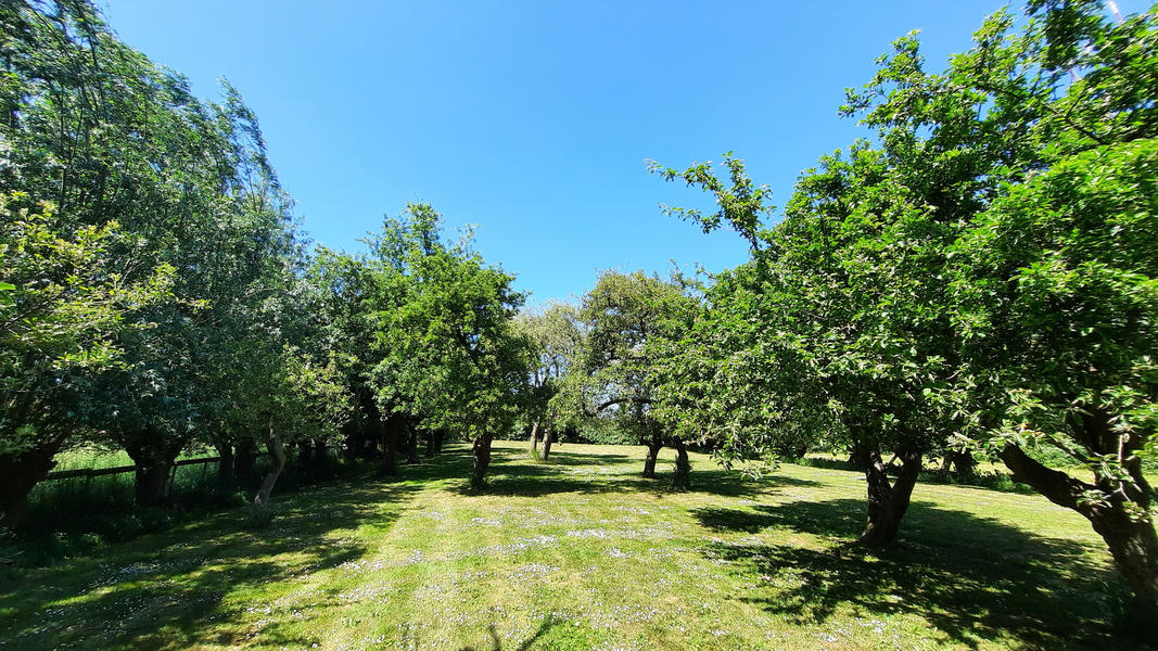 Enjoy and relax among the fruit trees in Oudewater - place 1 #14