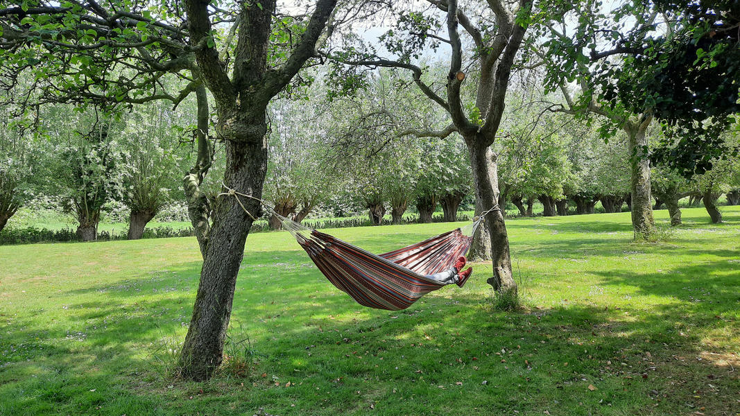 Enjoy and relax among the fruit trees in Oudewater - place 1 #18