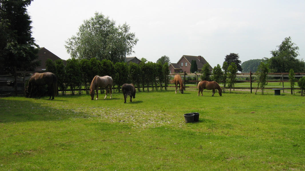 Camping pony #16