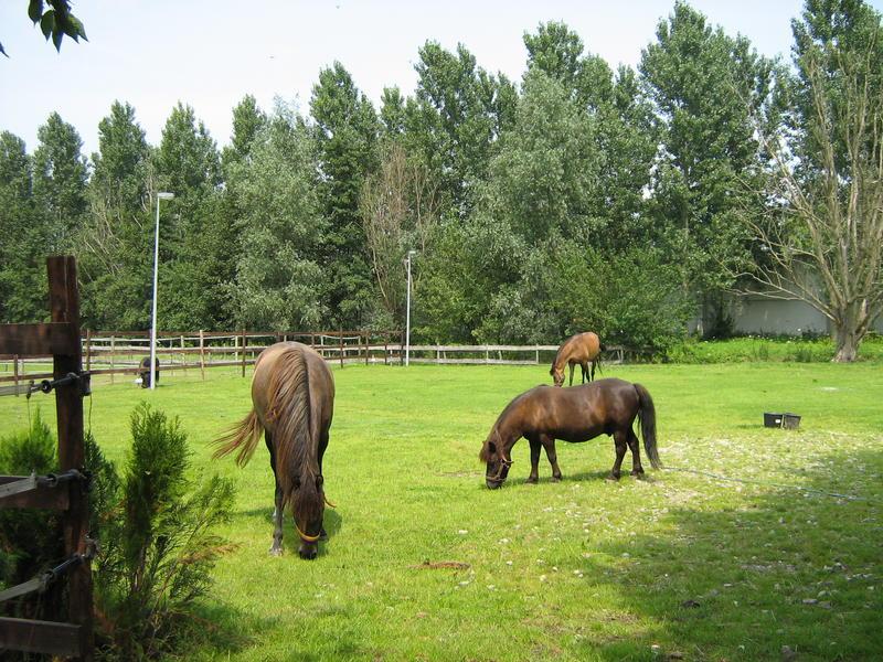 Camping pony #1