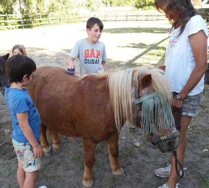 Camping pony #20
