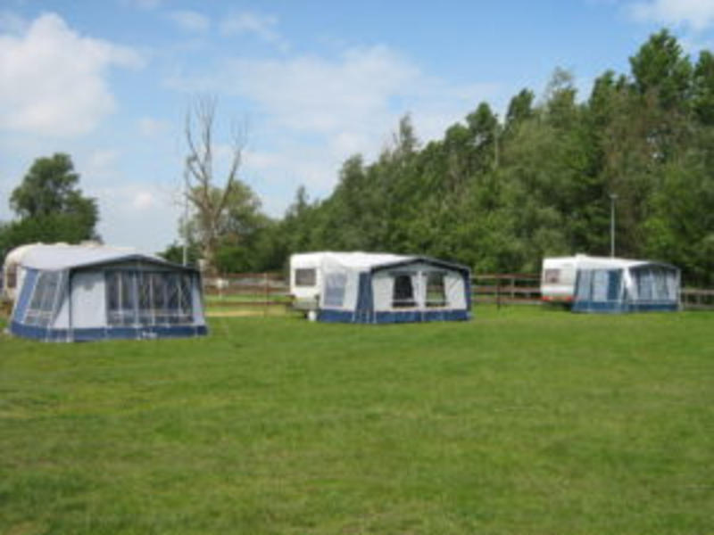 Camping pony #5