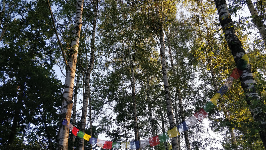 Rustig kamperen aan mooie vijver #4