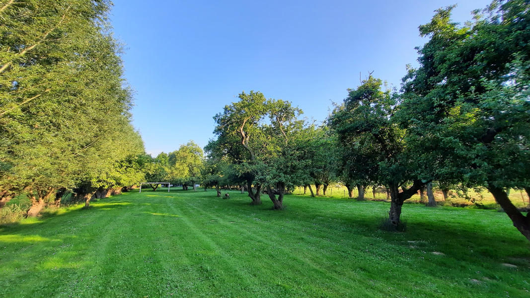 Enjoy and relax among the fruit trees in Oudewater - place 2 #10