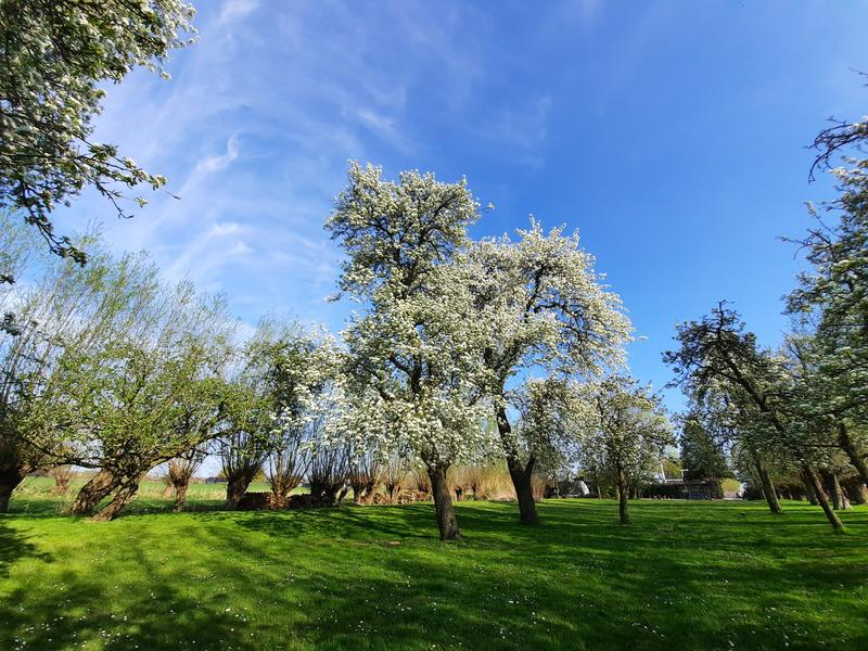 Enjoy and relax among the fruit trees in Oudewater - place 2 #2