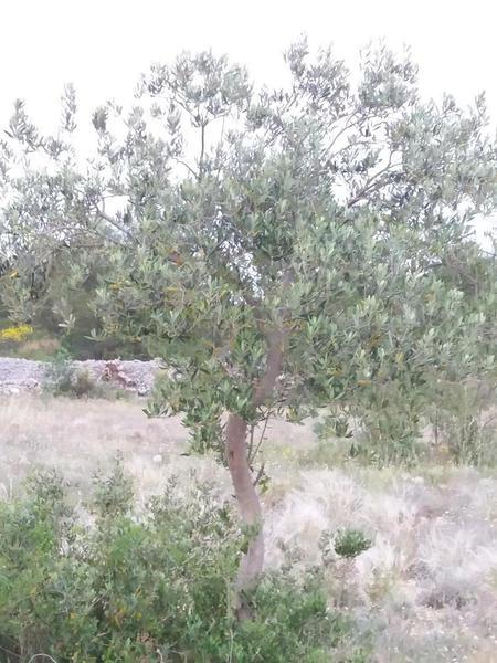 Divine Garden Croatia robinson camping near Vodice and Krka national park #9