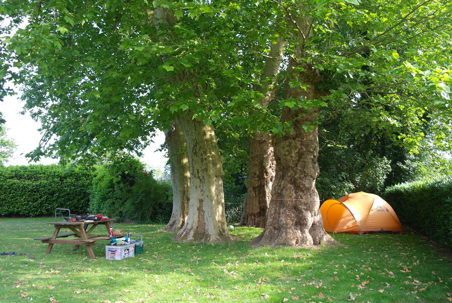 Camping under the plane trees at the foot of the Posbank #1