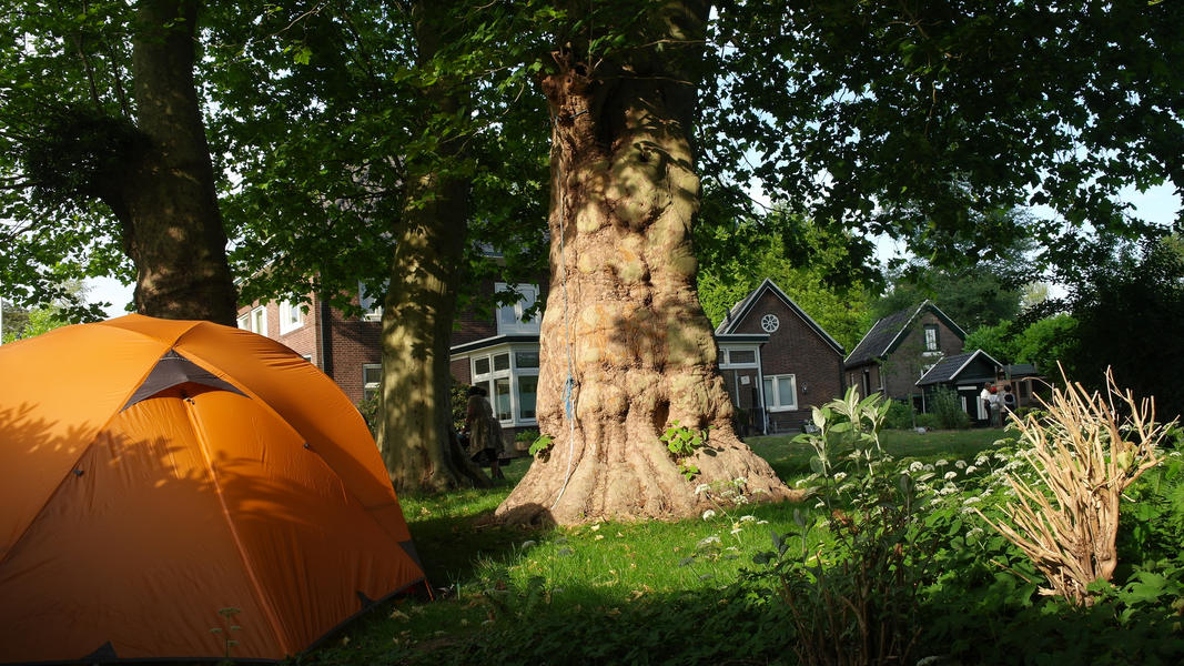 Camping under the plane trees at the foot of the Posbank #3