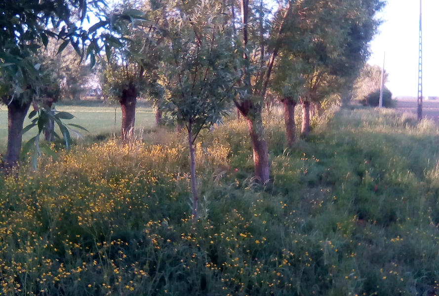 VeTu DeBo (bleib zwischen den Bäumen) #2