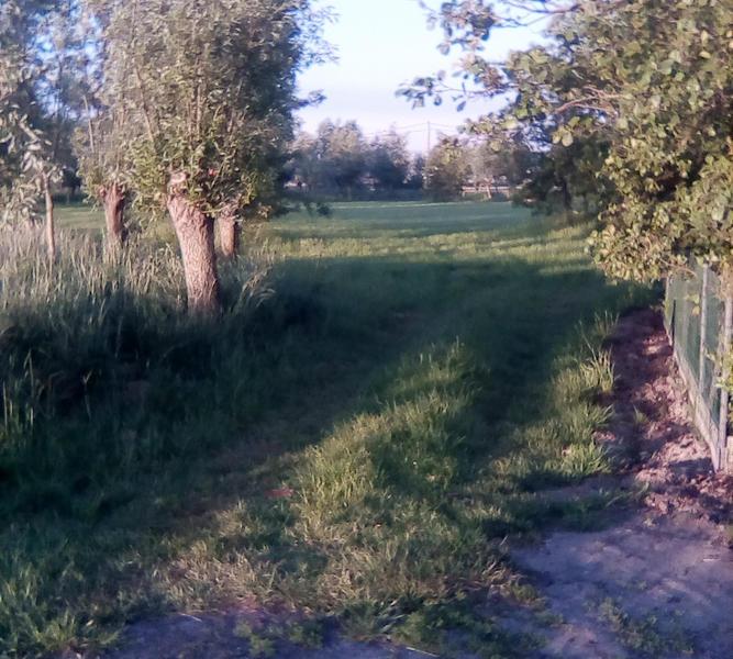 VeTu DeBo (bleib zwischen den Bäumen) #3