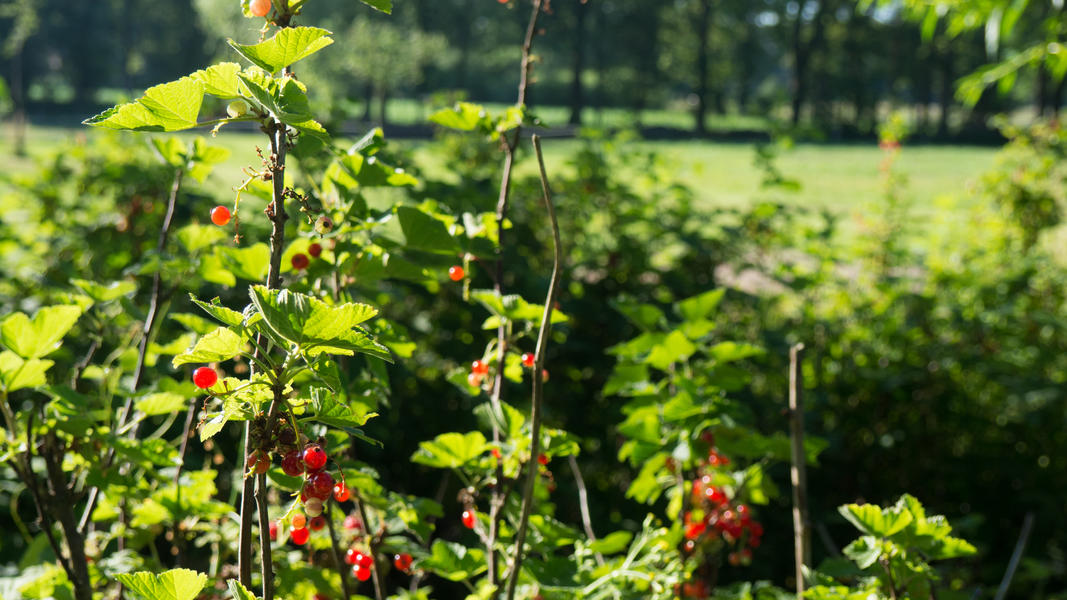Mijn tuin in de Zoeke #11