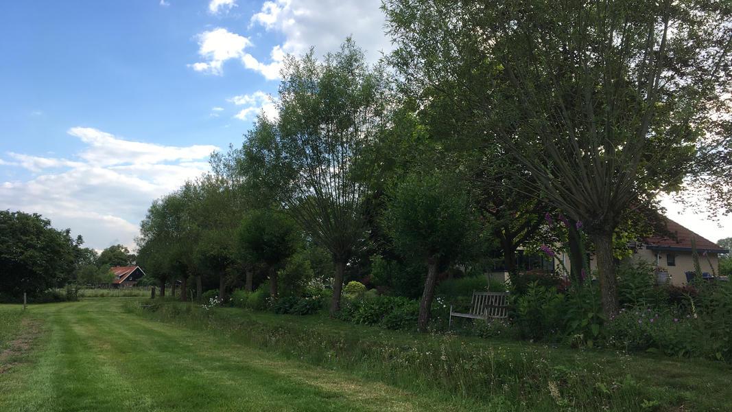 Mijn tuin in de Zoeke #14