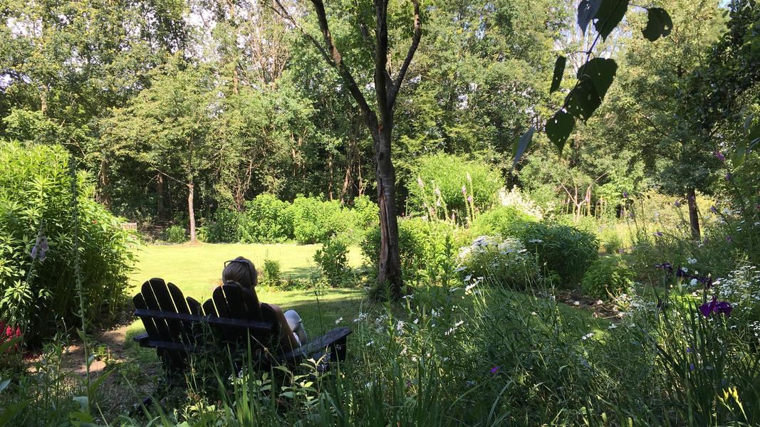 Mijn tuin in de Zoeke #4