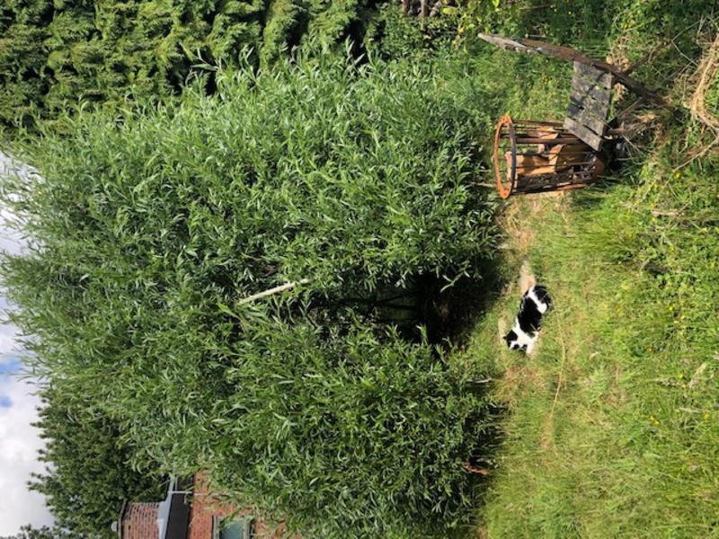 Kamperen in de tuin naast bungalow met een mooi uitzicht ! #4