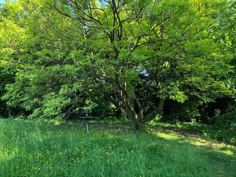 Kamperen in de tuin naast bungalow met een mooi uitzicht ! #9