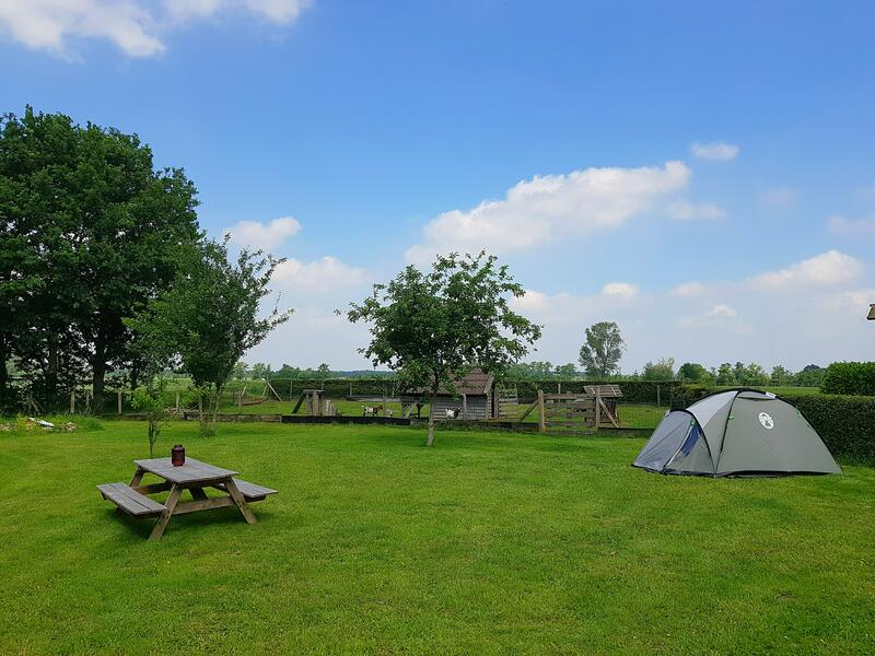 Camping between the meadows and animals in Drenthe #1