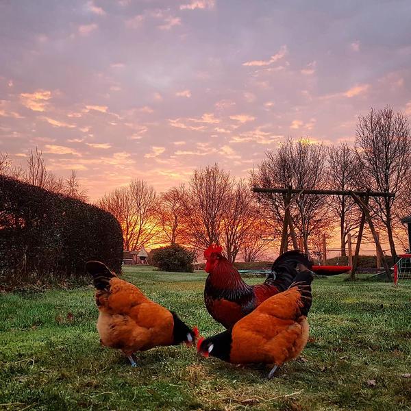 Camping zwischen Wiesen und Tieren in Drenthe #3