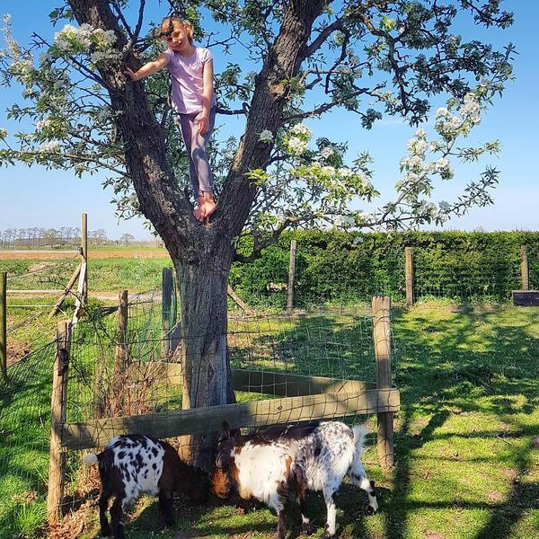 Camping zwischen Wiesen und Tieren in Drenthe #6