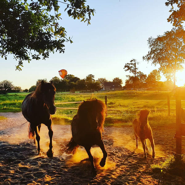 Camping between the meadows and animals in Drenthe #7