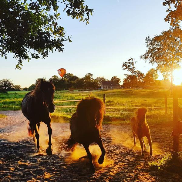 Camping zwischen Wiesen und Tieren in Drenthe #7