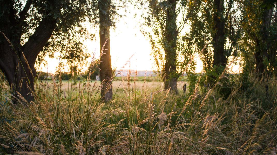 Jouw plek voor een nacht in de polder van 60 m2 #12