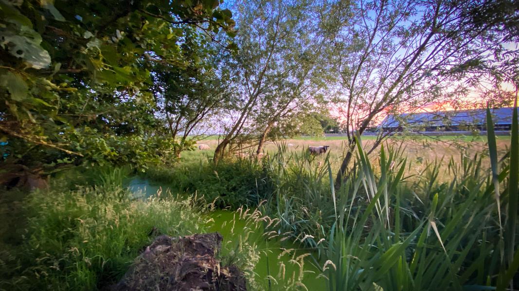 Jouw plek voor een nacht in de polder van 60 m2 #14
