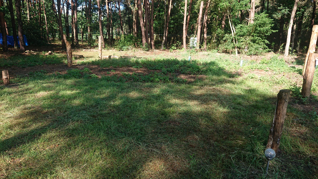 Camping in a young food forest, place Strawberry #4