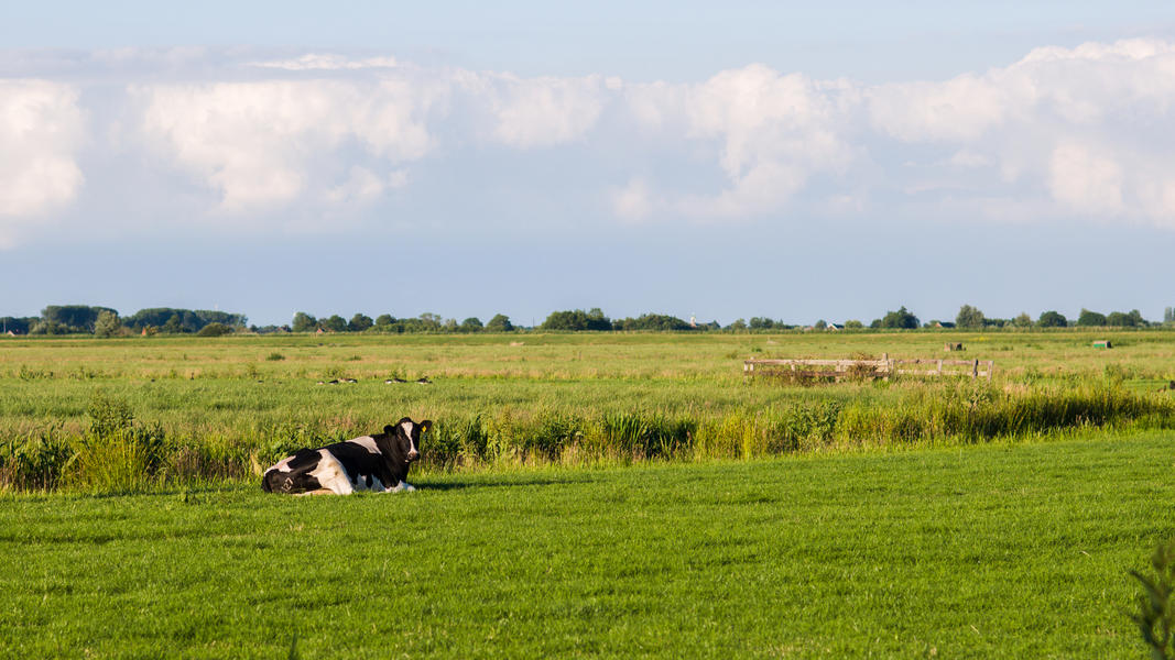 Your place for the night in the 100 m2 polder #6